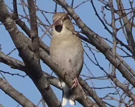 公園の野鳥