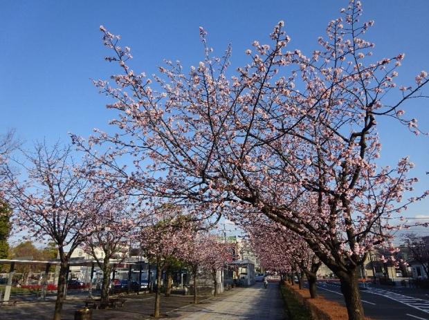 春の花@元郷 (1)