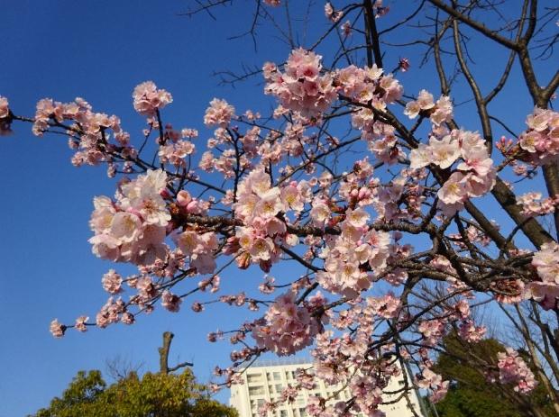 春の花@元郷 (4)
