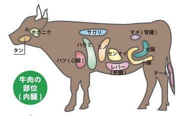 牛肉(内臓)の部位
