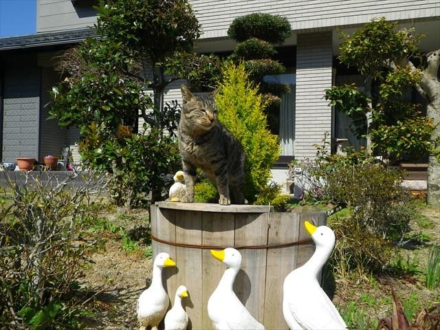 河内の新入り猫-1