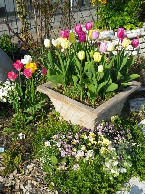 平田ナーセリーの花壇
