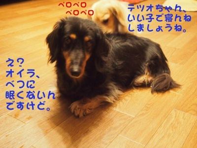 写真4687(№455)1