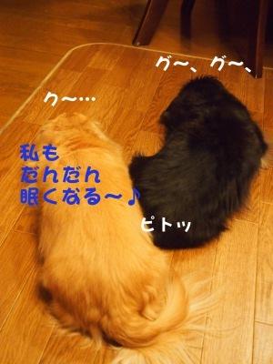 写真4690(№455)1