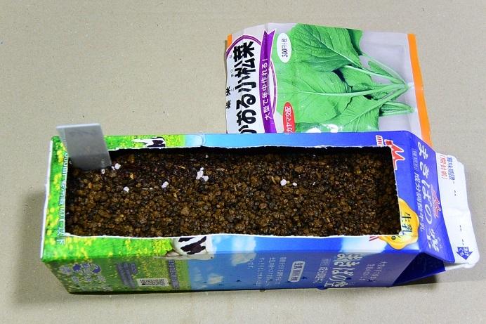 18小松菜_種蒔き0565a