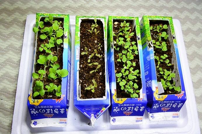 18葉野菜栽培_0680a