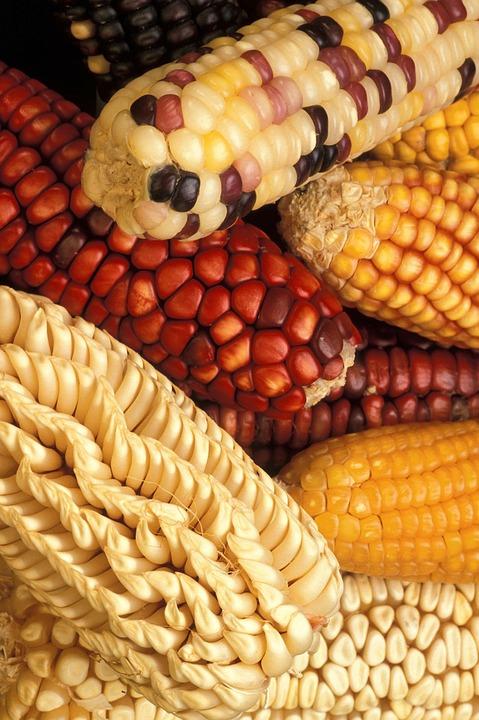 corn-386761_960_720.jpg