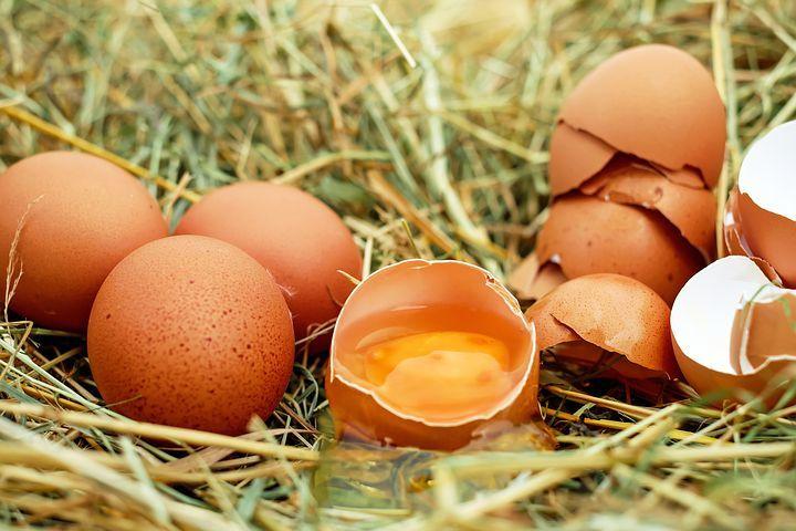 egg-1510449__480.jpg