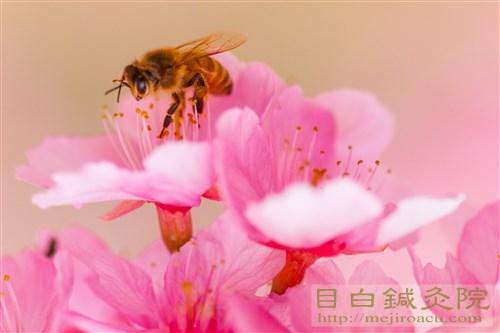 20180309中医学で花粉症1