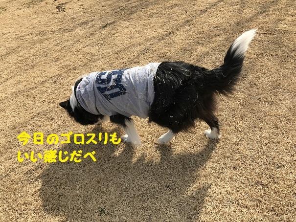 IMG_9730_20180303212202d00.jpg