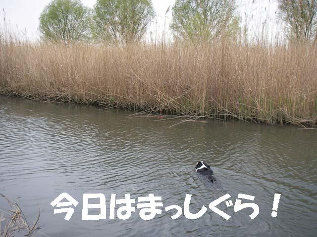川に流れたおもちゃ2f0114893_10152928