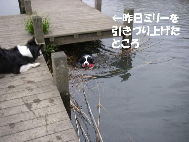 川に流れたおもちゃ4f0114893_10163923