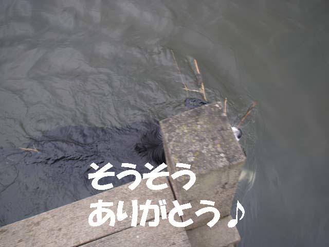 川に流れたおもちゃ6f0114893_101734100