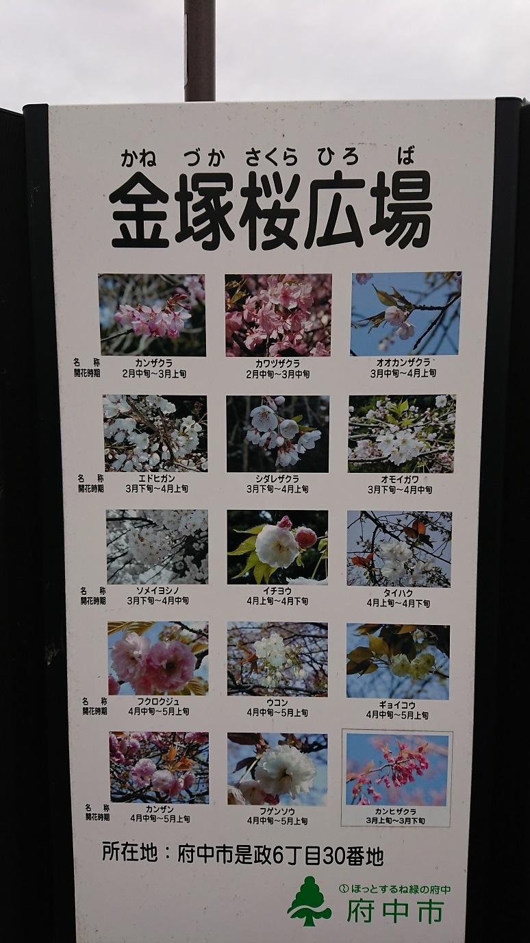 03 是政金塚桜広場