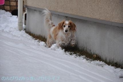 snow2018012216.jpg