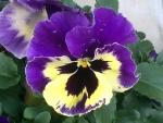 花18051