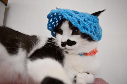 くぅブルー帽子ツバ