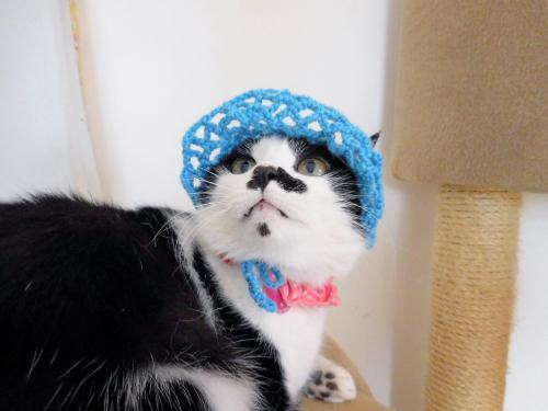 くぅブルー帽子ツバ02