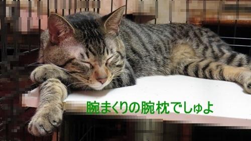 腕枕の進化系1