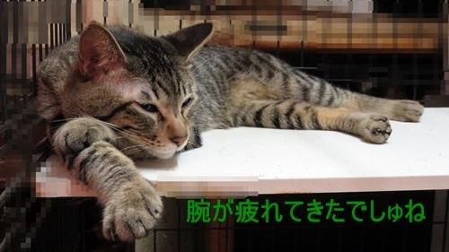 腕枕の進化系2