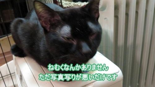 ねむくない黒猫1