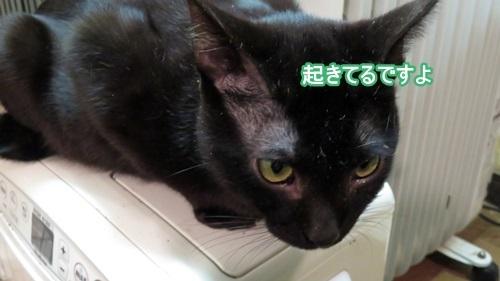 ねむくない黒猫2