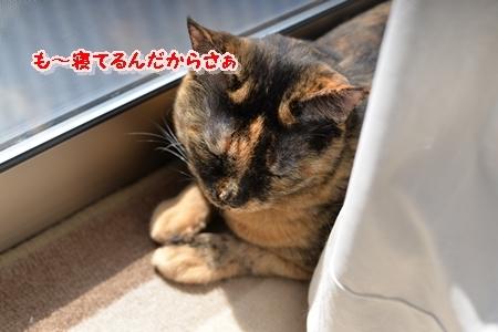 DSC_8909.jpg