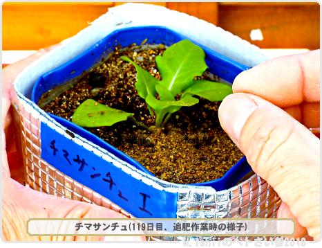 ペトさい(チマサンチュ・改)43