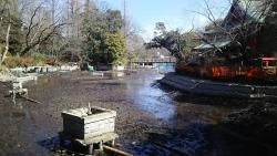 20180302井の頭公園12
