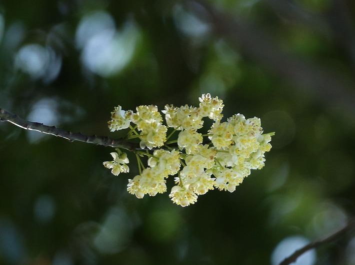 アオモジの花横に切取 30 3 23