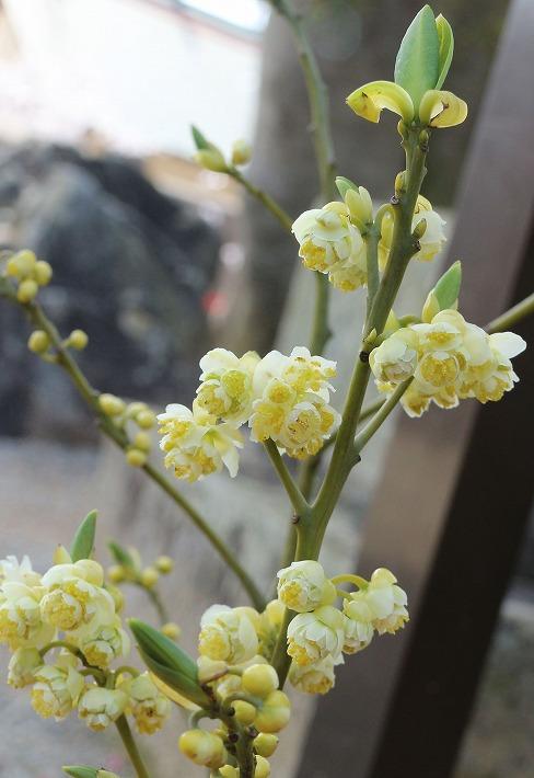 青文字の花やと思う 滝宮