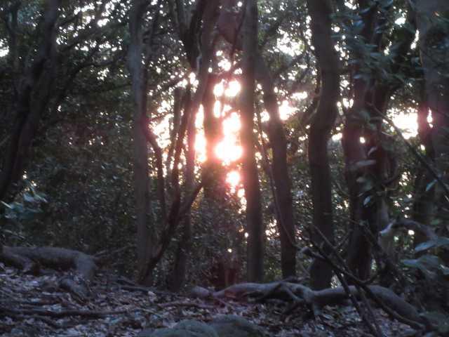IMG5106JPG樹間に太陽が