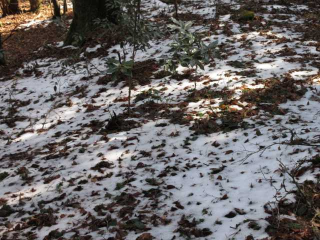 IMG5393JPG残雪