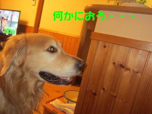 IMG_4616.jpg