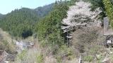20170430田立の滝161