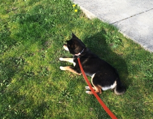 芝の上で休憩