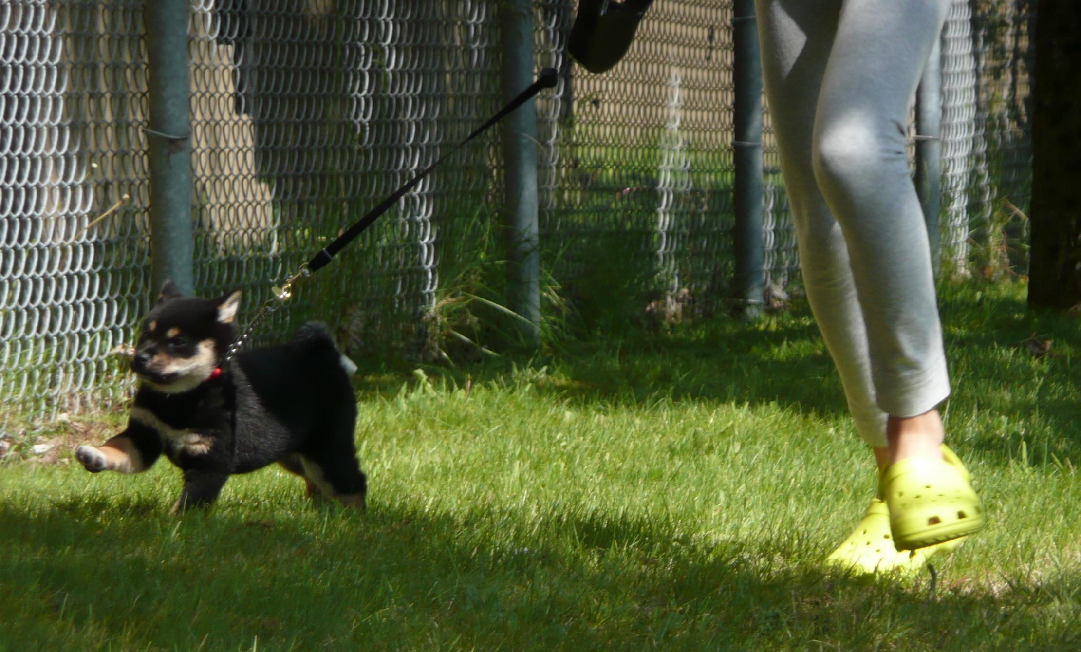 初めて芝生にさわり、走る