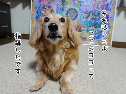 kinako9132.jpg