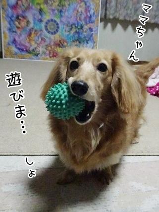 kinako9136.jpg