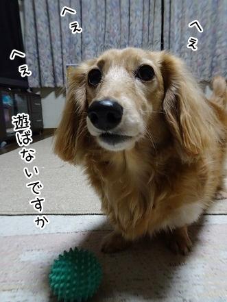kinako9137.jpg