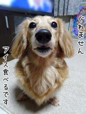 kinako9138.jpg