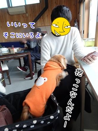 kinako9140.jpg