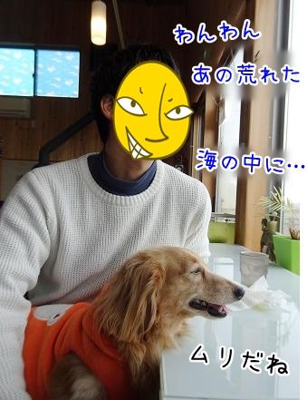kinako9142.jpg