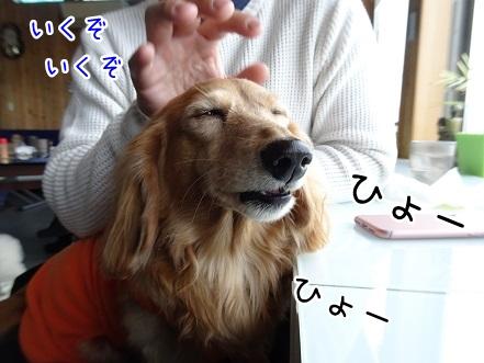 kinako9146.jpg