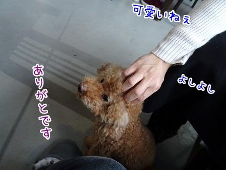 kinako9147.jpg