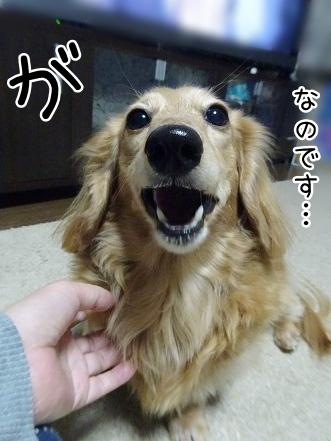 kinako9161.jpg