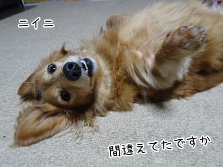 kinako9166.jpg