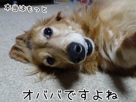 kinako9168.jpg