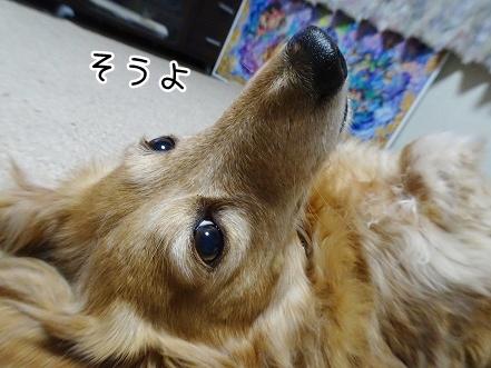 kinako9170.jpg