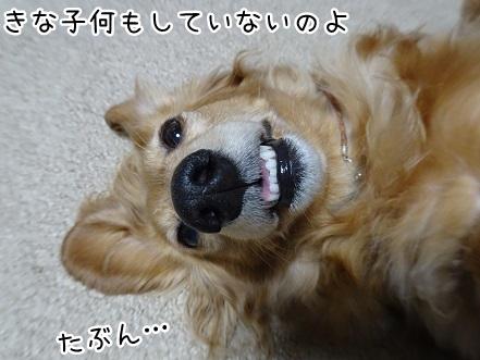 kinako9172.jpg